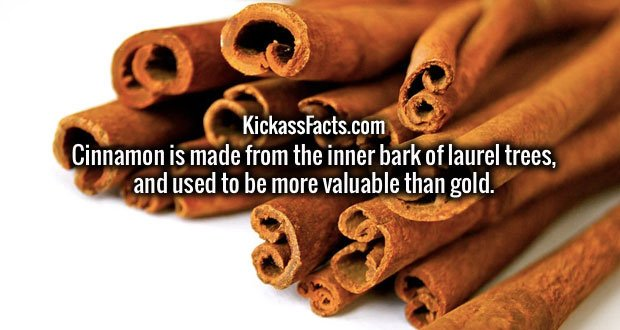 Cinnamon is made from the inner bark of laurel trees, and used to be more valuable than gold.