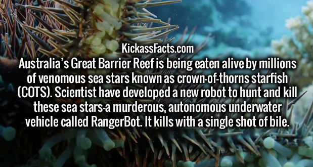 Australia's Great Barrier Reef is being eaten alive by millions of venomous sea stars known as crown-of-thorns starfish (COTS). Scientist have developed a new robot to hunt and kill these sea stars—a murderous, autonomous underwater vehicle called RangerBot. It kills with a single shot of bile.