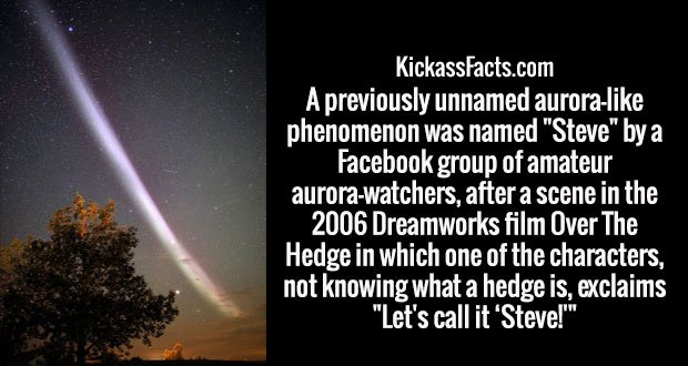 "A previously unnamed aurora-like phenomenon was named ""Steve"" by a Facebook group of amateur aurora-watchers, after a scene in the 2006 Dreamworks film Over The Hedge in which one of the characters, not knowing what a hedge is, exclaims ""Let's call it 'Steve!'"""