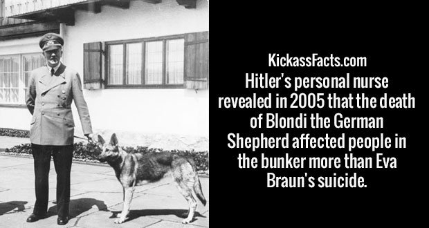 Hitler's personal nurse revealed in 2005 that the death of Blondi the German Shepherd affected people in the bunker more than Eva Braun's suicide.