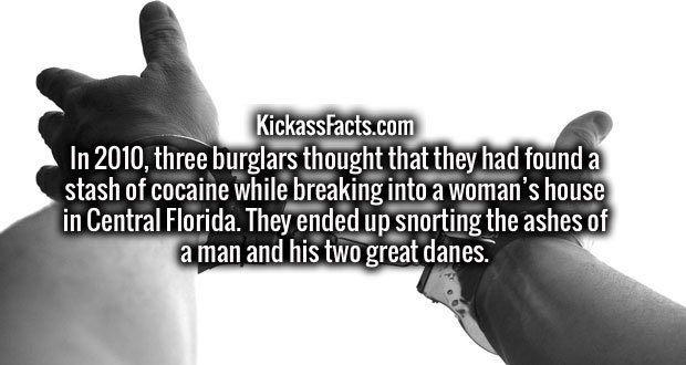 In 2010, three burglars thought that they had found a stash of cocaine while breaking into a woman's house in Central Florida. They ended up snorting the ashes of a man and his two great danes.